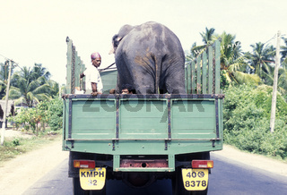 SRI LANKA NUWARA ELIYA ELEPHANT TRANSPORT