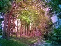 Road in a beautiful tropical forest