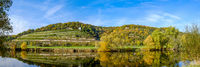 Vineyard on the river Saale