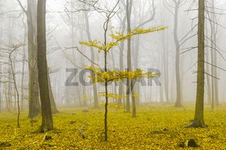 Fantasie Wald mit nebel und gelbem Laub