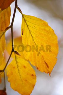 Farben des Herbst