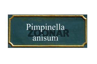 schild Anis, pimpinella anisum