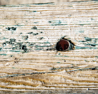 metal nail dirty stripped paint in the brown   red wood door and rusty  yellow