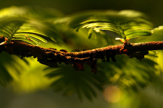 fruehling im mammutbaum.jpg