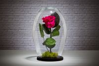 Red eternal rose under the glass dome