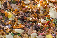 colorful autumn leaves and pine cones on the forest floor