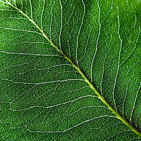 Macro photo of the smallest streak of green leaf. Natural pattern for layout. Top view