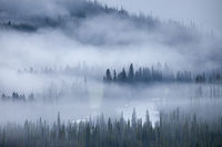 A foggy morning the forests of the Rocky Mountains of Alberta