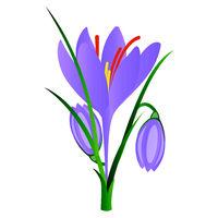 Mohit-Batch-5-Flower_Crocus_14.eps