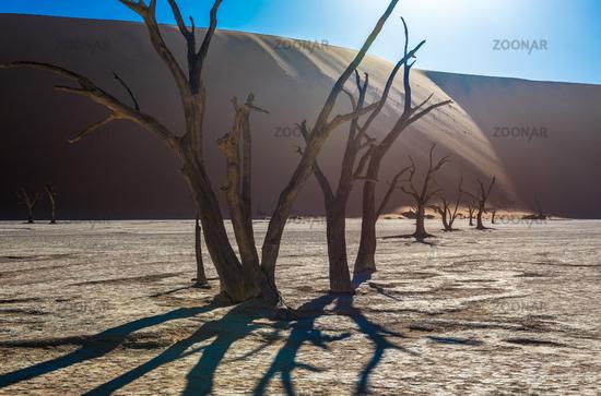 Dead Camelthorn Trees and red dunes in Deadvlei, Sossusvlei, Namib-Naukluft National Park, Namibia