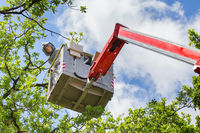 Man fights oak procession caterpillars in aerial platform