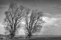 Trees on Lebbin