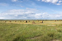Typical summer landscape in Belarus (White-Russia) in summer with straw bales
