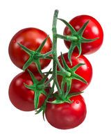 Cluster of tomatoes, paths