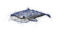 whale doodle illustration