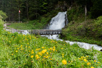 idyllic waterfall surrounded by green forest landscape and a wildflower meadow in the foreground