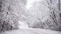 Winter snowy road. Branches of snowy trees hang over the road. Winter landscape. Journey in the winter.