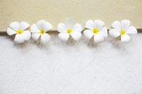 White frangipani on light background