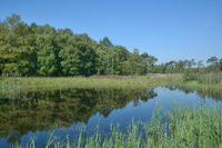 Biotope in Elmpter Schwalmbruch Nature Reserve,lower Rhine region,Rhineland,Germany