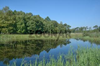 Biotop im Naturschutzgebiet Elmpter Schwalmbruch,Niederrhein,NRW,Deutschland