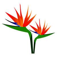 Mohit-Batch-5-Flower_Bird of Paradise_08.eps