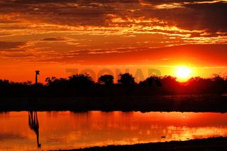 Giraffe im Sonnenaufgang am Wasserloch, Etosha-Nationalpark, Namibia, (Giraffa camelopardalis) | Giraffe in the sunrise at a waterhole, Etosha National Park, Namibia, (Giraffa camelopardalis)