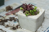 Decoration with succulents in concrete bowl - cactus plant