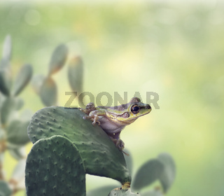 Green Frog on a cactus