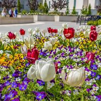 Square Array of vibrant flowers blooming under sunlight in spring