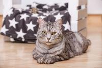 Getigerte Katze liegt im Wohnzimmer
