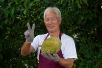 Farmer and musang king durian