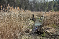 Renaturalization in a wetland near of monastery Chorin in Germany