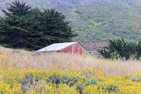 Garrapata Barn in blooming nature