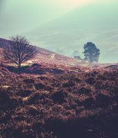 Winter Mist In Scotland
