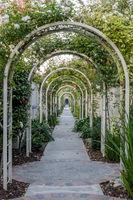Garden Tunnel of Roses