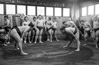 Sumo wrestling training in Tokyo, Japan