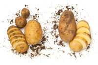 Fresh Organic Potatoes Isolated On White Background