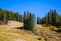 The wooded slopes of mountains
