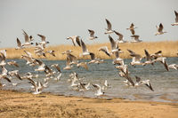 a flock of seagulls flies from the shore above the water