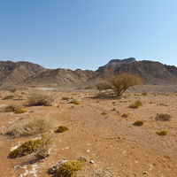 Melancholy and emptiness of the desert in Israel.