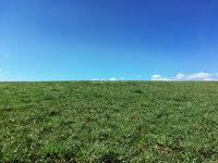 Green meadow hill with blue sky and copy space.