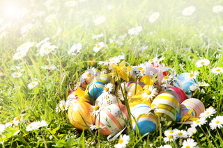 Ostern, Frühling, Ostereier, Wiese, Gänseblümchen, Osterglocken, Textraum