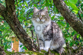 Fluffy cat is sitting on a tree branch. Pet. Cat for a walk in the yard. The cat is climbing trees.