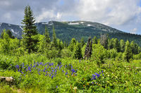 Picturesque view of blooming alpine meadow and mountain glaciers