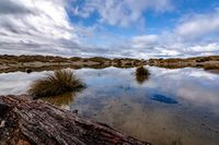 Reflections in a Rainwater Pond, Sand Dunes, Oregon, USA