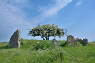 Grosssteingrab in Nobbin auf Ruegen,Ostsee,Mecklenburg-Vorpommern,Deutschland