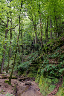 wild green European forest and sandstone canyons
