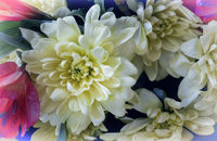 Beautiful chrysanthemum flower in a bouquet close-up.
