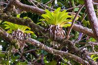 Bromeliad tree trunk from Brazilian rainforest
