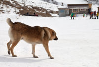 Dog on snowy ski slope at winter day and snowboarders at background
